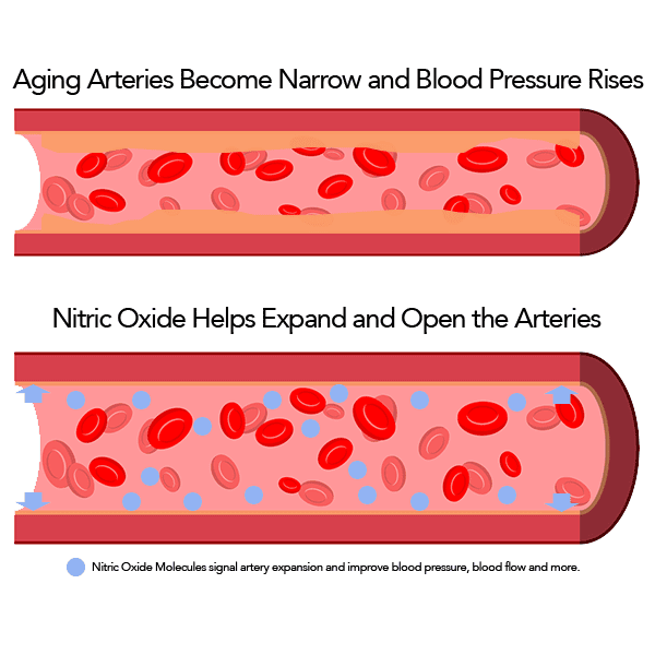 a picture of aging arteries vs non aging arteries with high and low blood pressure